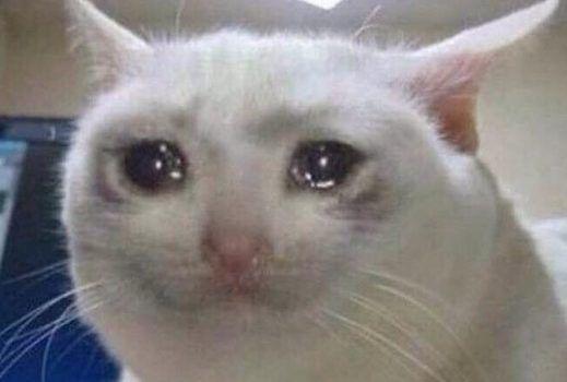 gato-chorando
