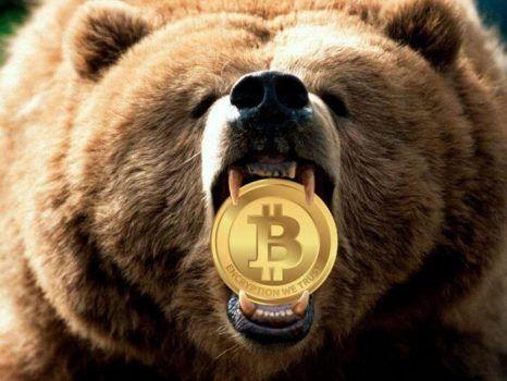 urso com uma moeda de bitcoin na boca