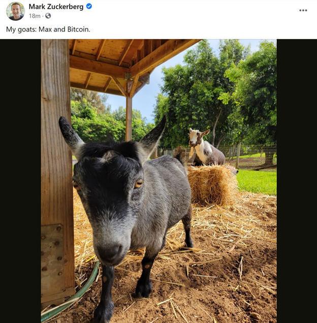 Uma captura de tela do post de Zuckerberg